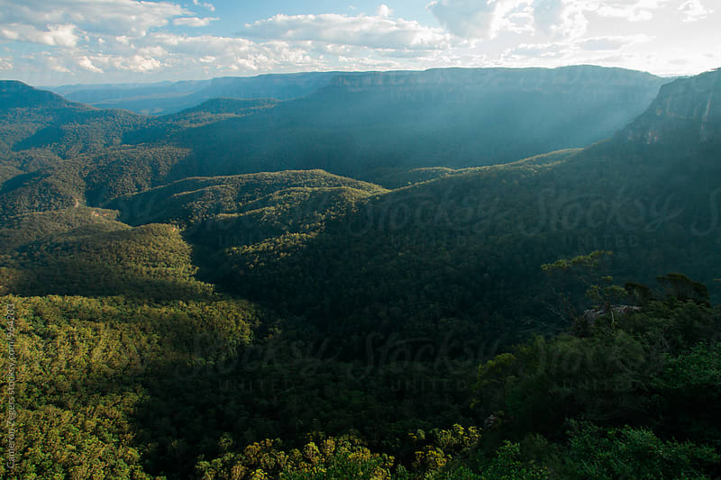 Eucalyptus forest in valley at Blue Mountains National Park, Australia by Cameron Zegers for Stocksy United