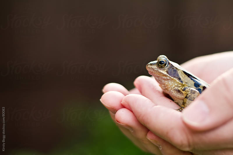 Man holding a British/English Common frog in profile by Kirsty Begg for Stocksy United