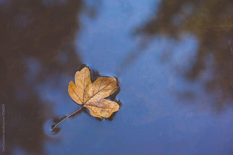 Yellow leaf floating on a puddle. by Lea Csontos for Stocksy United