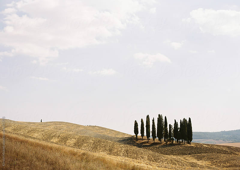 A group of cypress trees in Tuscany, Italy by Kirstin Mckee for Stocksy United