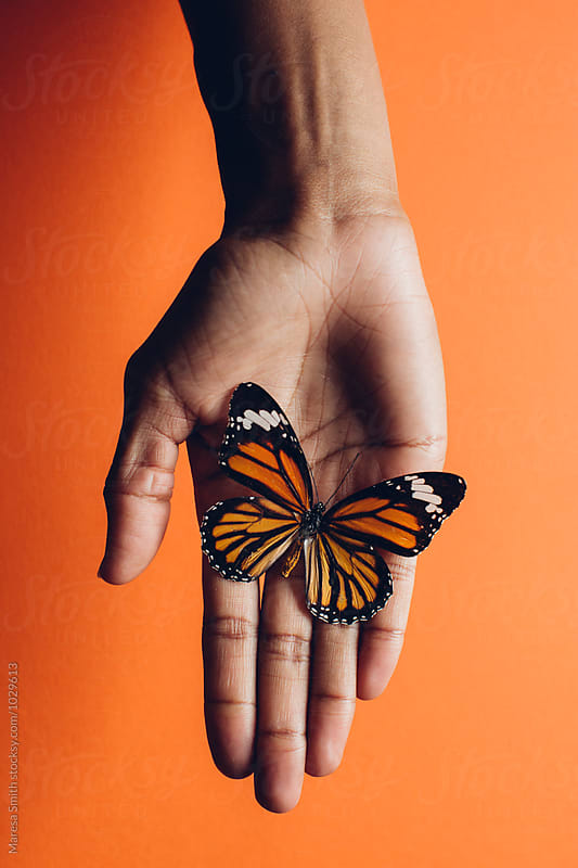 An orange butterfly resting on a hand against a orange background by Maresa Smith for Stocksy United