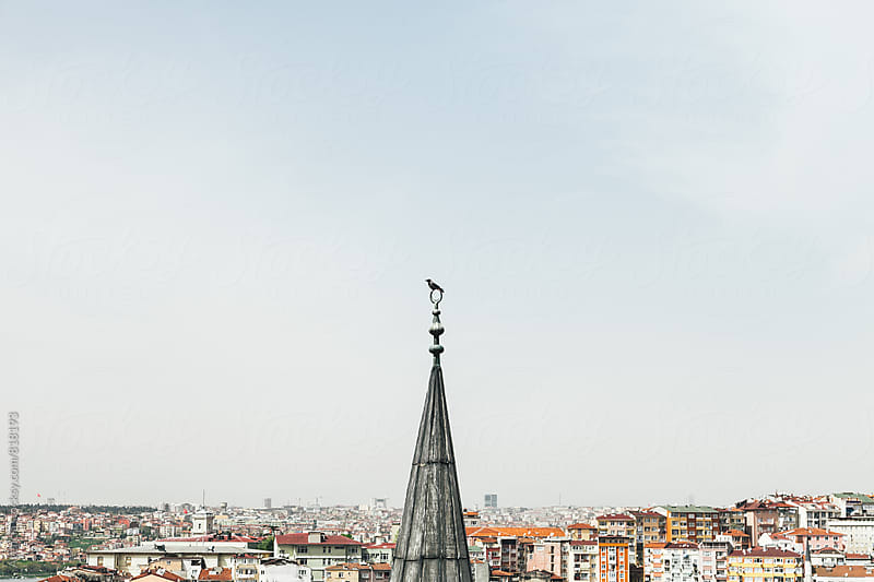 Minaret Bird by Agencia for Stocksy United