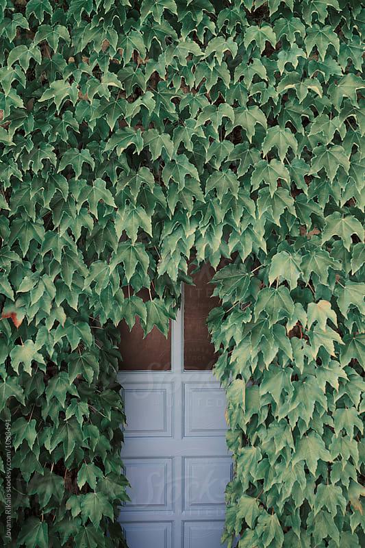 Hidden doors by Jovana Rikalo for Stocksy United