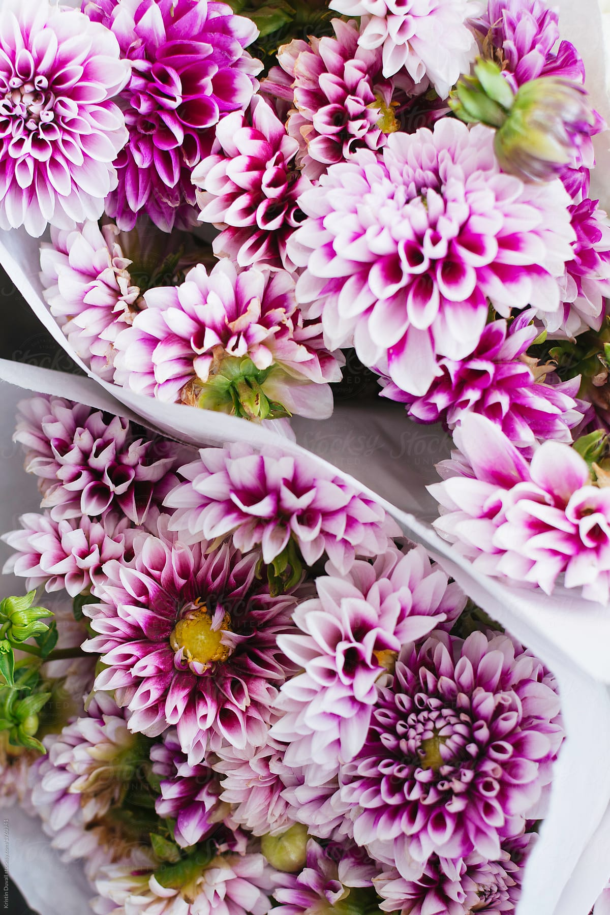 Bouquets of purple and white dahlia flowers stocksy united bouquets of purple and white dahlia flowers by kristin duvall for stocksy united izmirmasajfo