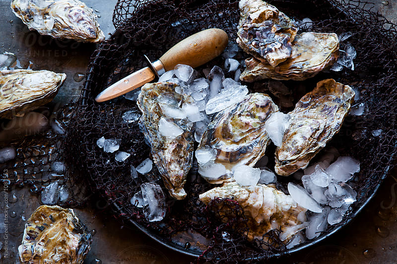 Oysters on ice with oyster knife  by Nadine Greeff for Stocksy United