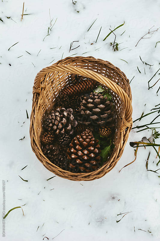 Basket with pinecones on a snowy landscape.  by BONNINSTUDIO for Stocksy United