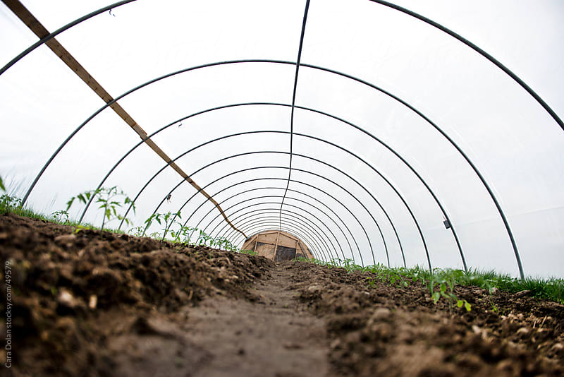 Wide view of a greenhouse on a farm filled with young seedlings  by Cara Dolan for Stocksy United