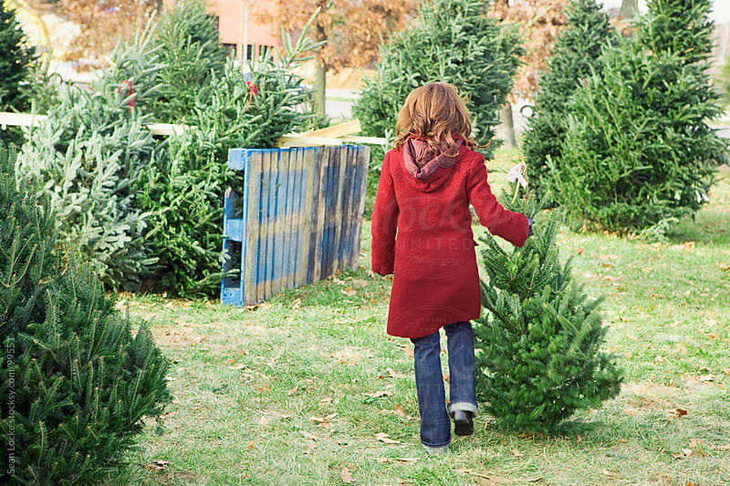 Tree Lot: Woman Walking Away With Tree Choice by Sean Locke for Stocksy United