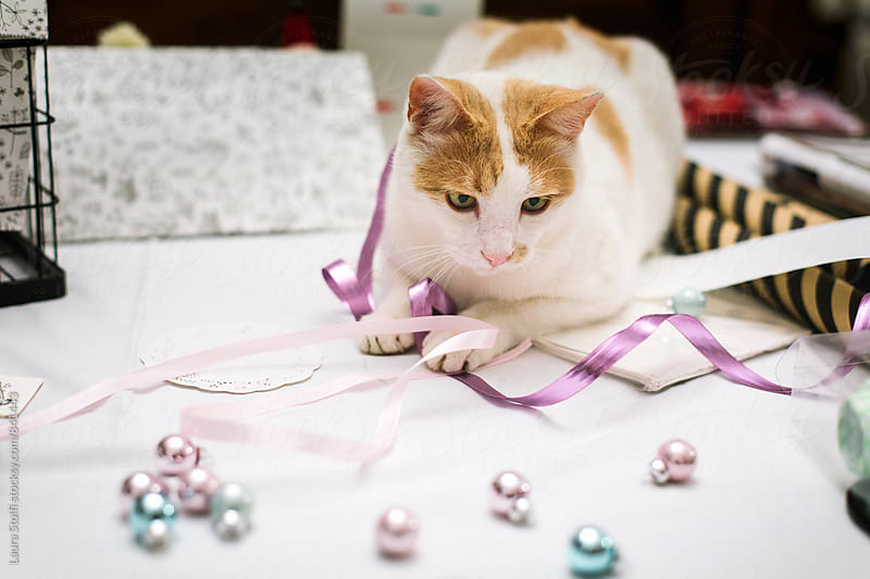 White and ginger cat playing with christmas balls and ribbons by Laura Stolfi for Stocksy United