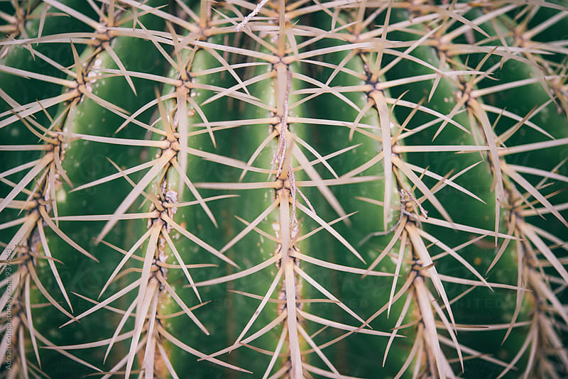 Cactus background by Adrian Cotiga for Stocksy United