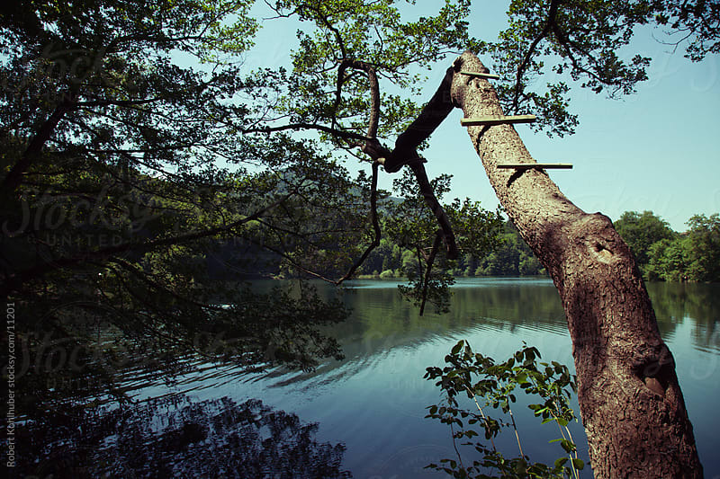 Lake with wooden tree ladder for swimming by Robert Kohlhuber for Stocksy United