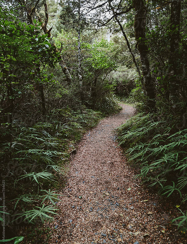 Path of hiking trail through lush forest by Matthew Spaulding for Stocksy United