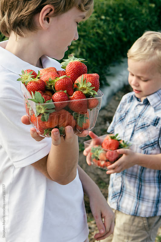 Boys with fresh picked strawberries by Stephen Morris for Stocksy United