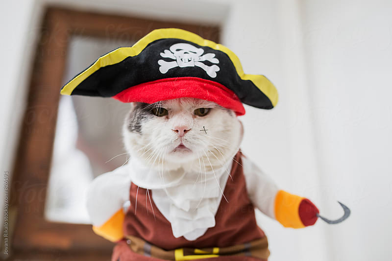 Pirate Cat by Jovana Rikalo for Stocksy United