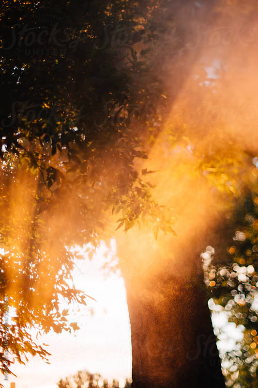 Freelensed image of sun rays with water particles shining through golden trees at sunset. by Jessica Byrum for Stocksy United