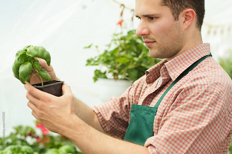 Nursery Garden Worker Holding a Plant by Lumina for Stocksy United