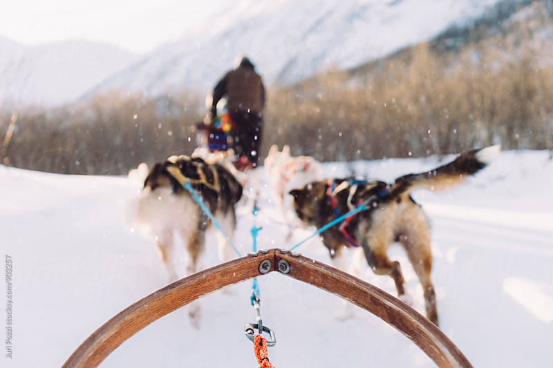 Sled dogs pulling a sled by Juri Pozzi for Stocksy United