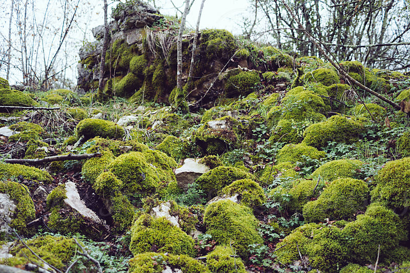 Mossy forest by Robert Kohlhuber for Stocksy United