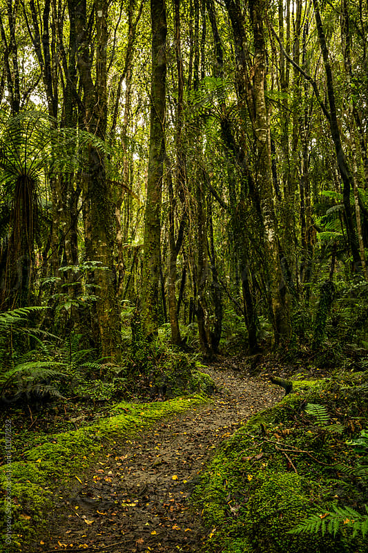 Walking Path Through Lush Rainforest by Odyssey Stock for Stocksy United