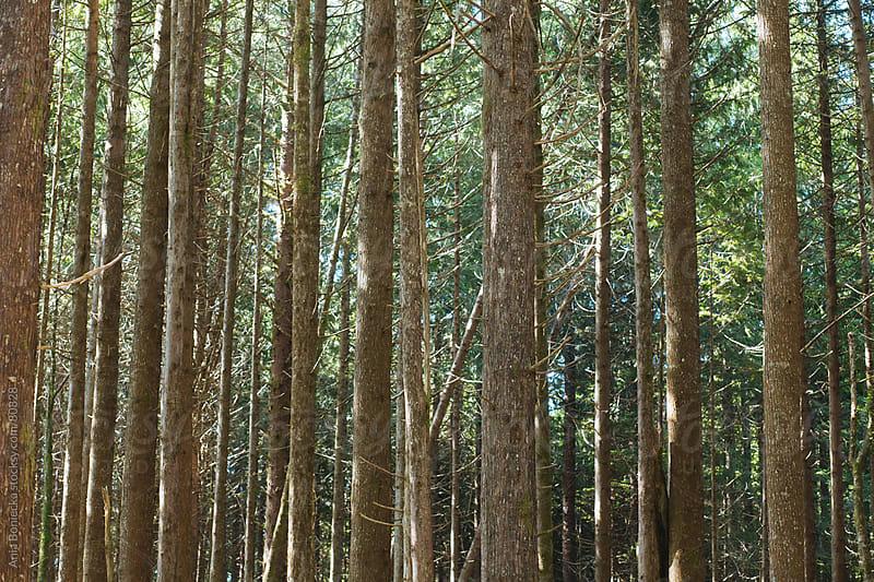 Forest by Ania Boniecka for Stocksy United