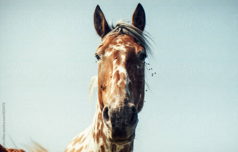 Spotted Horse by Kara Riley for Stocksy United