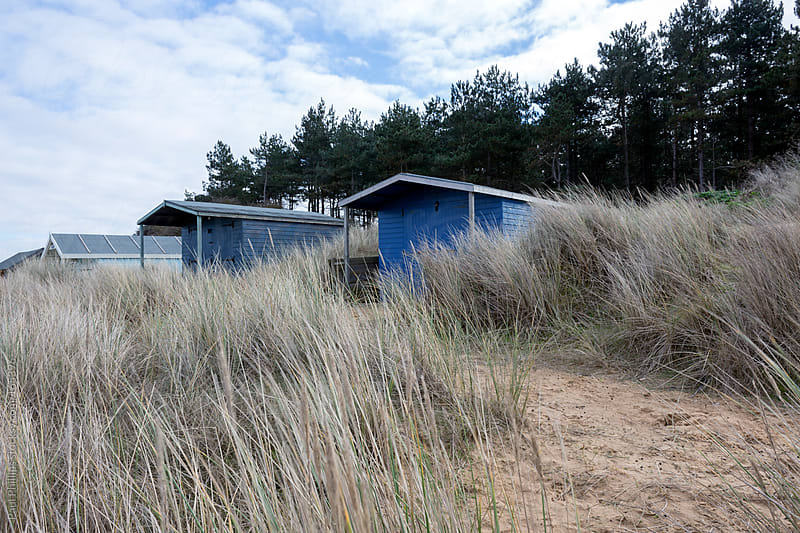 Beach huts in sand dunes set amongst tall beach grass and evergreen trees by Paul Phillips for Stocksy United