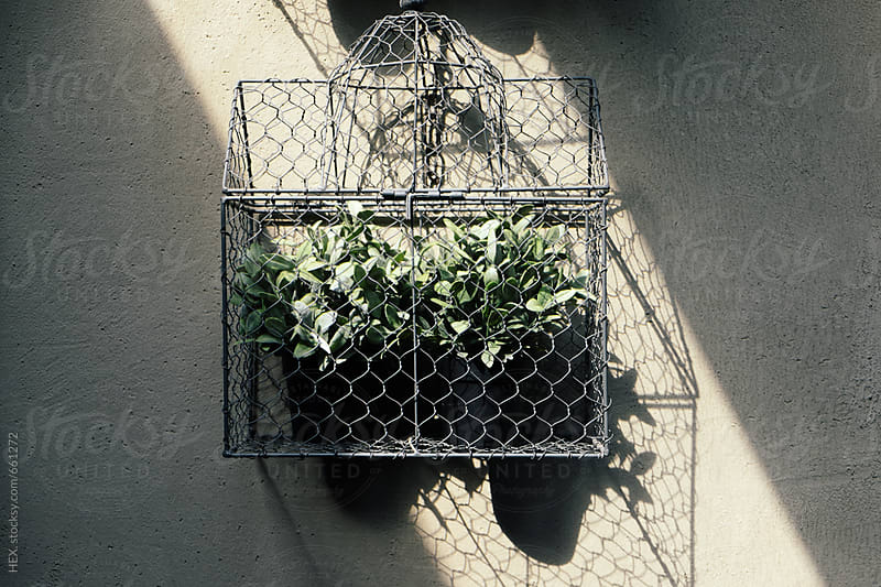 Plants inside a Cage by HEX. for Stocksy United