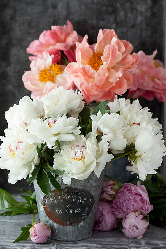 peonies by Susan Findlay for Stocksy United