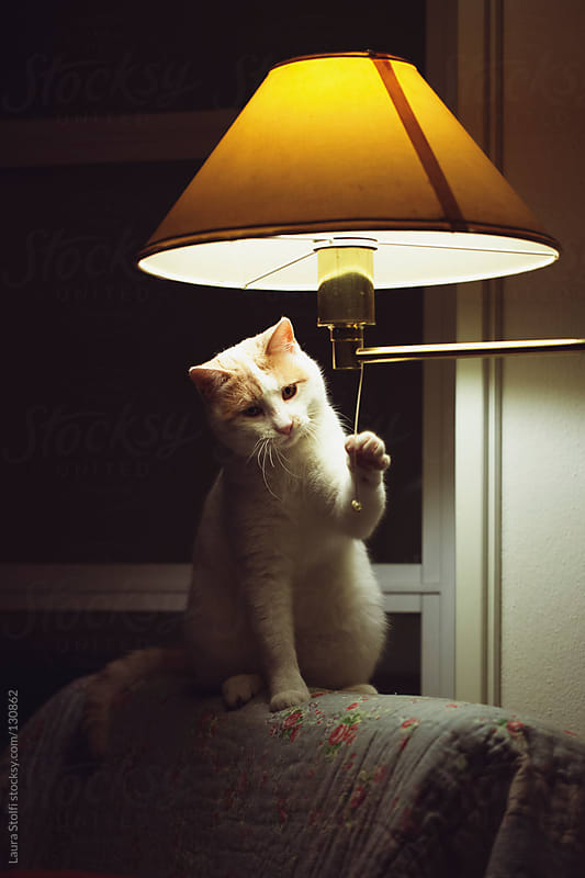 Cat sitting on armchair's backseat and playng with lamp string by Laura Stolfi for Stocksy United