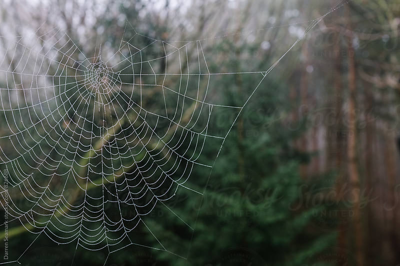 Spider web in a forest by Darren Seamark for Stocksy United