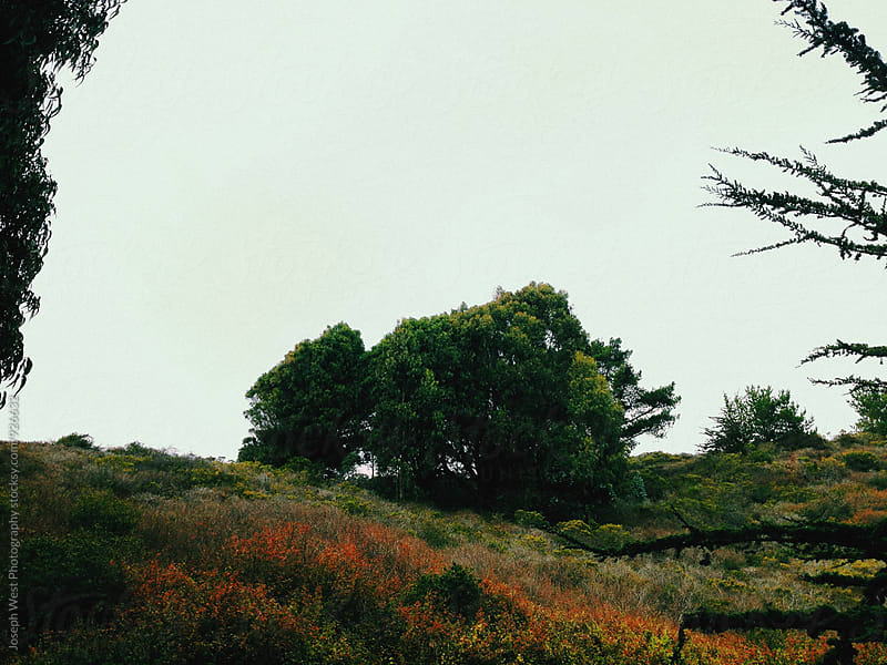 Tree standing on a hill with wild flowers. by Joseph West Photography for Stocksy United