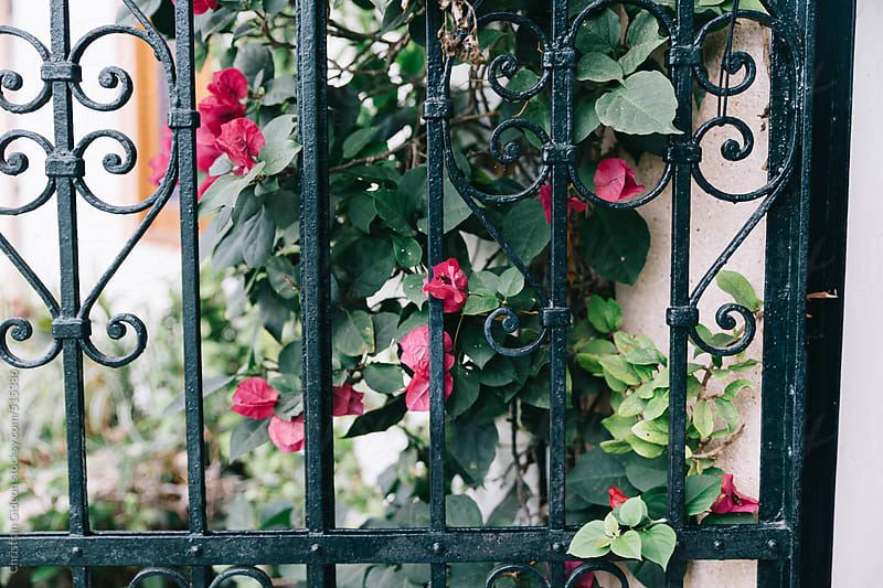 Flowers growing on iron gate by Christian Gideon for Stocksy United