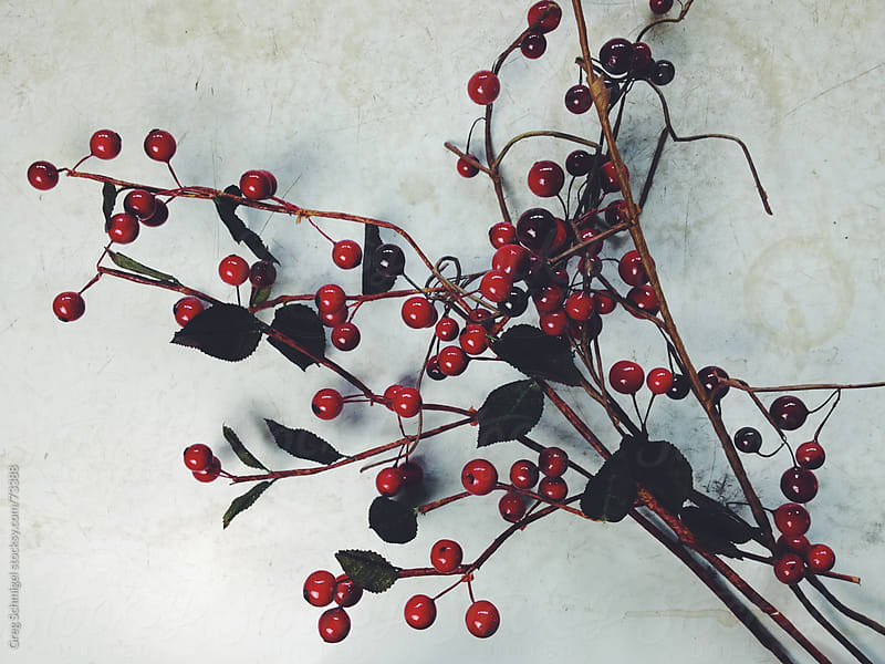 Christmas and holiday decorations; red berries and twigs by Greg Schmigel for Stocksy United