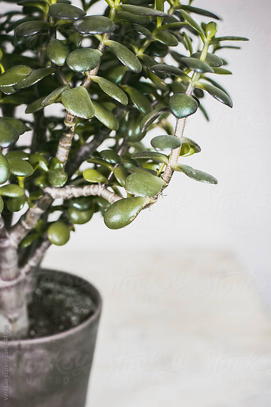 Succulent plant by Vera Lair for Stocksy United