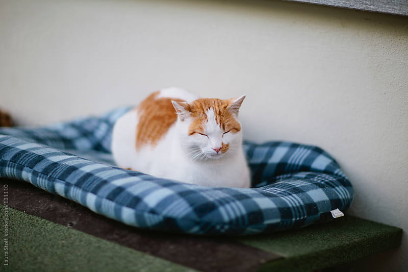 Red and white cat sleeping on checked cushion by Laura Stolfi for Stocksy United