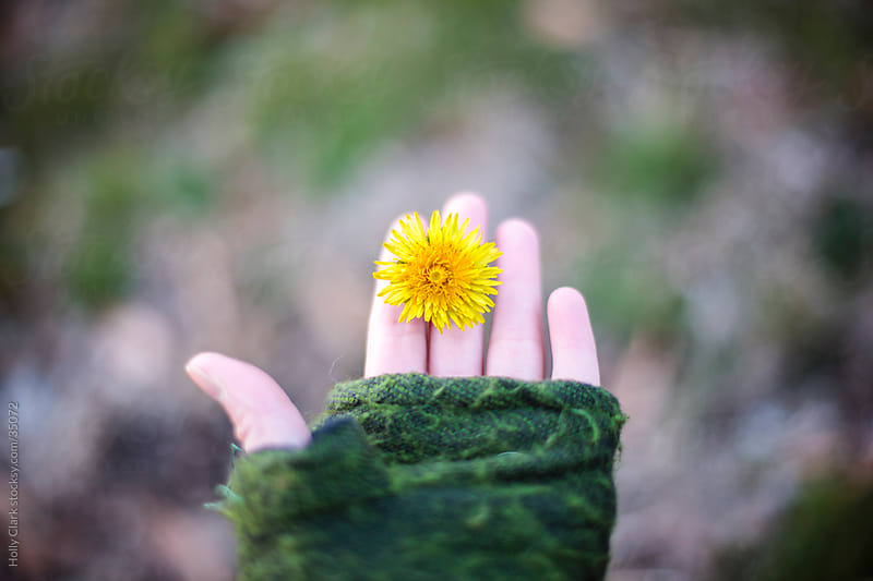 Woman Holds a Dandelion Between Her Fingers in Winter by Holly Clark for Stocksy United