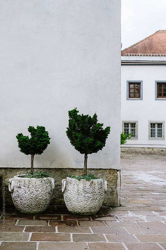 Plants in the Old Town by Aleksandra Jankovic for Stocksy United