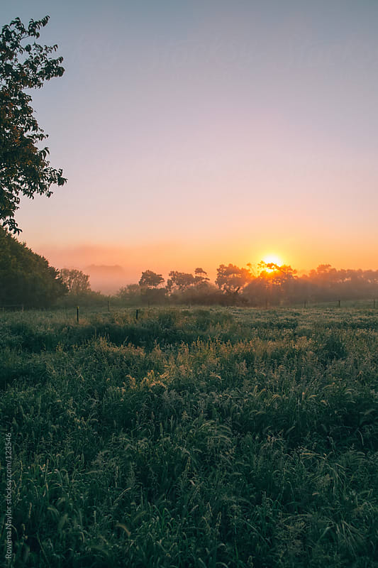 Misty Morning Sunrise on a farm lansdcape by Rowena Naylor for Stocksy United