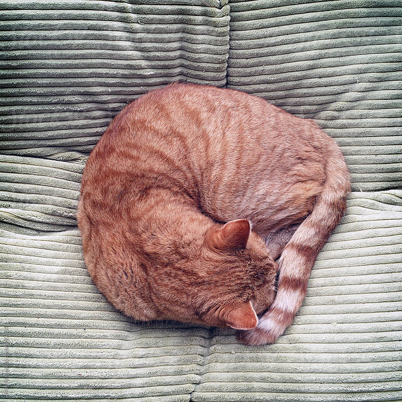 Ginger tomcat sleeping on a big cushion by Marcel for Stocksy United