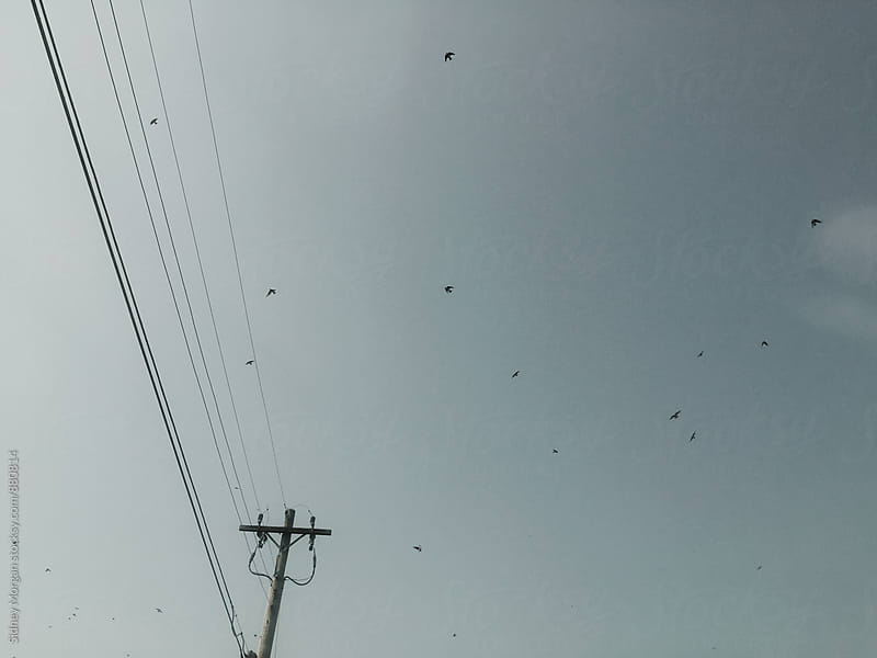 Birds Overhead by Sidney Morgan for Stocksy United