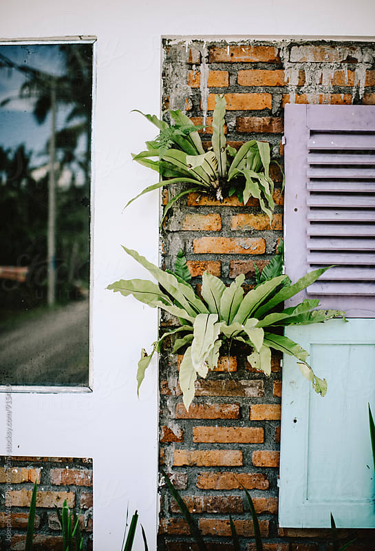 Plants on the side of a home by Joseph West Photography for Stocksy United