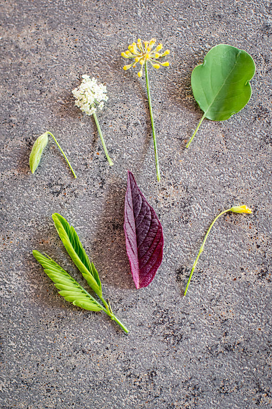 Spring Plants from Farm Garden 2 by Jenny Sathngam for Stocksy United