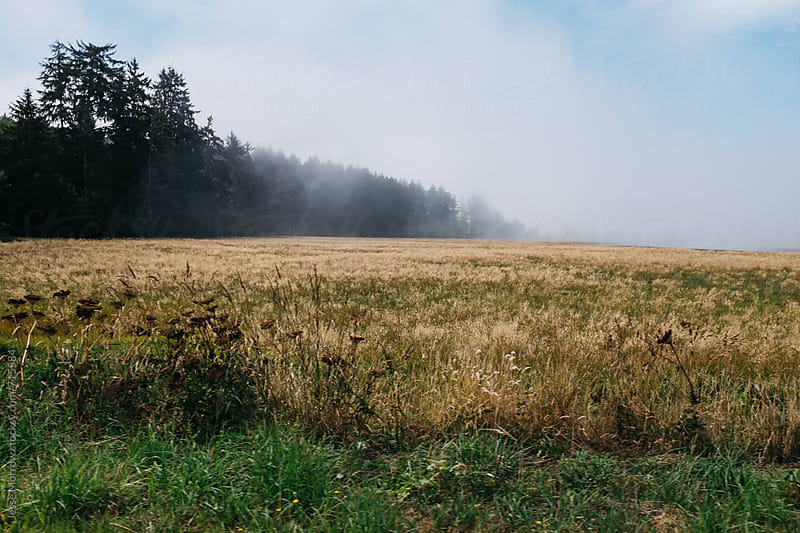 fog rolling through field  by Jesse Morrow for Stocksy United
