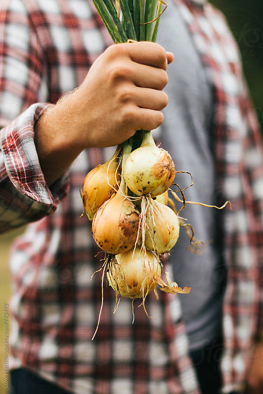 Man In Flannel Holding Bunch Of Onions Picked From The Garden by Luke Mattson for Stocksy United