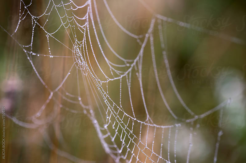 Details Of A Beautiful Spider Web by ALICIA BOCK for Stocksy United