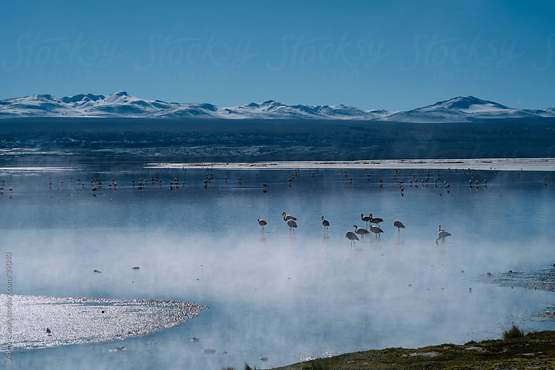 Flamingos in a salt lake set amidst a backdrop of mountains by Adrian Seah for Stocksy United
