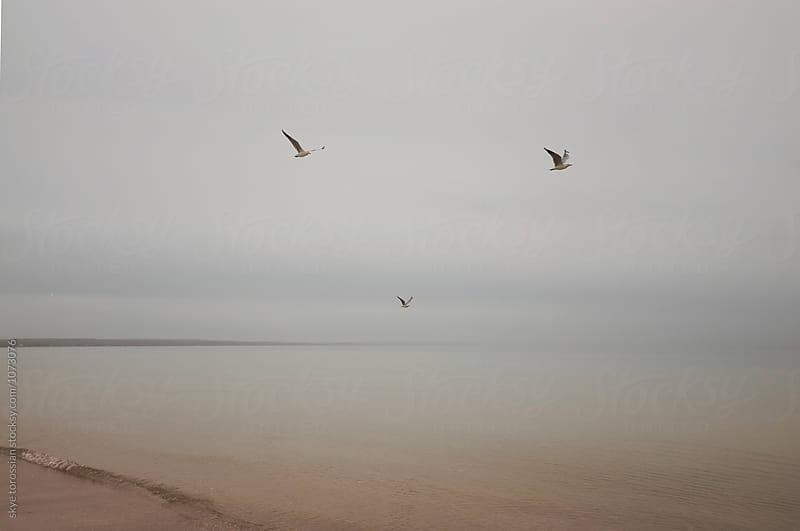 Seagulls at a foggy beach by skye torossian for Stocksy United