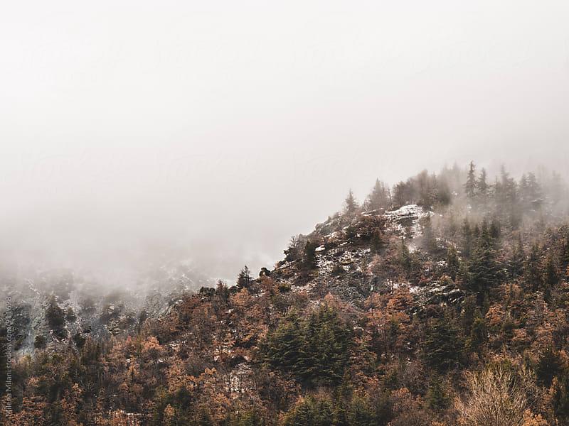 Wintertime  by Milena Milani for Stocksy United