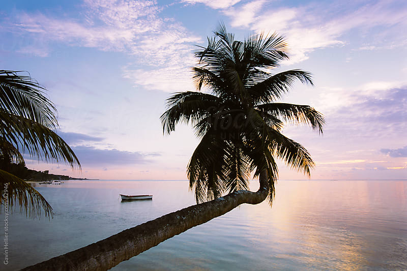 Leaning palm tree at sunset, Anse Severe, La Digue, Seychelles, Indian Ocean, Africa by Gavin Hellier for Stocksy United