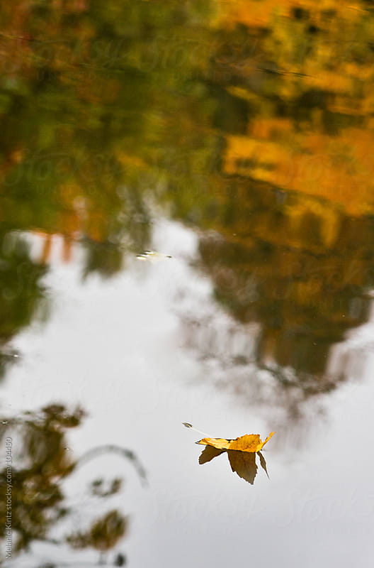 Yellow leaf floating on river with other fall trees reflected by Melanie Kintz for Stocksy United